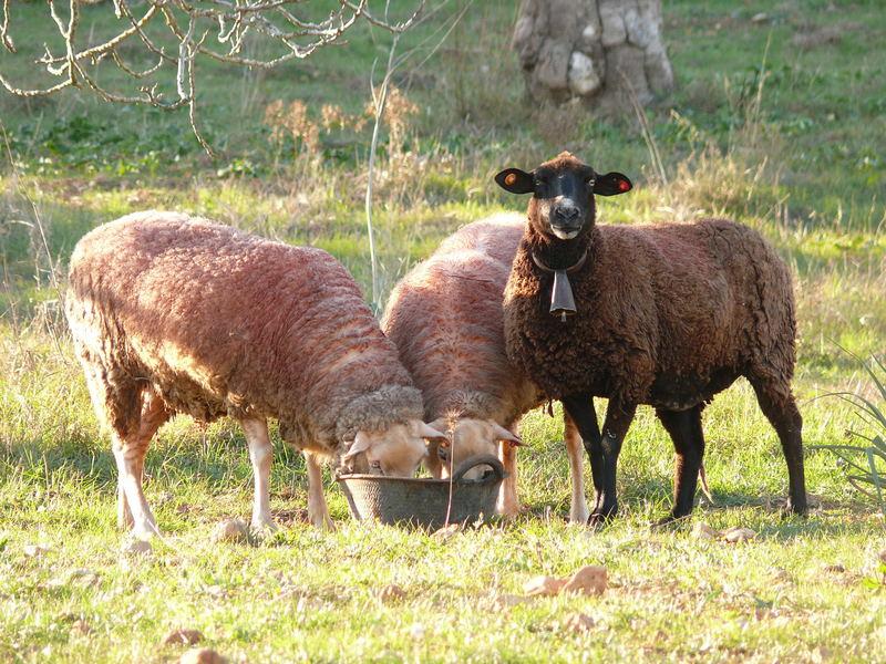 """Unser """"schwarzes Schaf"""" in der Familie"""