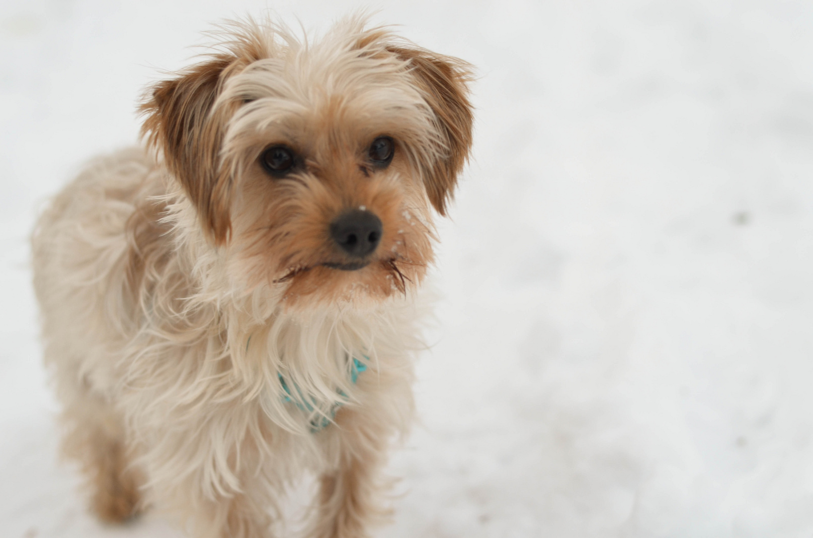 Unser Teddy im Schnee