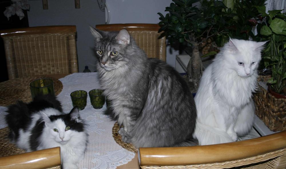Unser Trio Infernal...