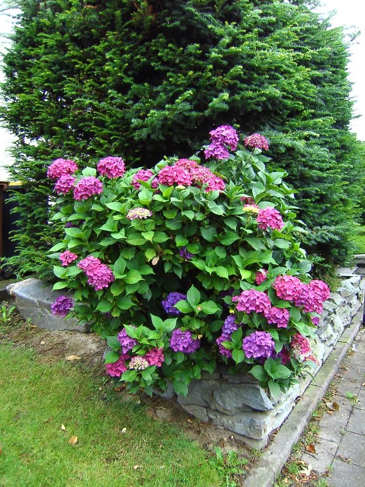 Unser Vorgarten 2008
