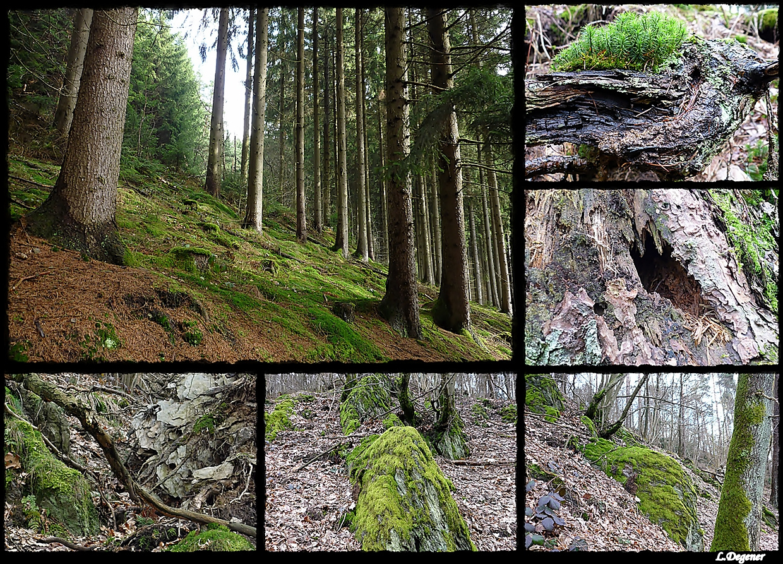 Unser Wald...