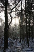 Unser Wald..