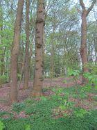 Unser Wald im April