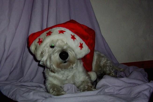 unser weihnachtshund