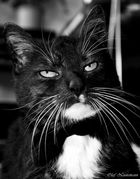 Unsere alte Katze