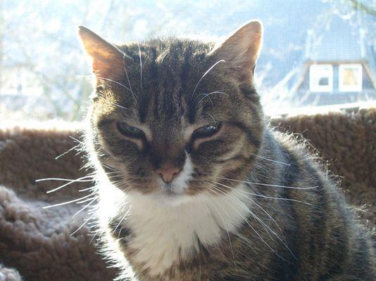 Unsere alte Katze Mimi :)