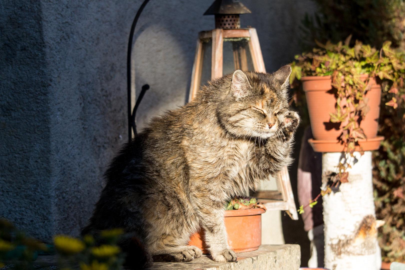 Unsere alte Lady putzt sich in der Sonne