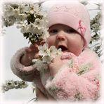 Unsere Baumblüte...