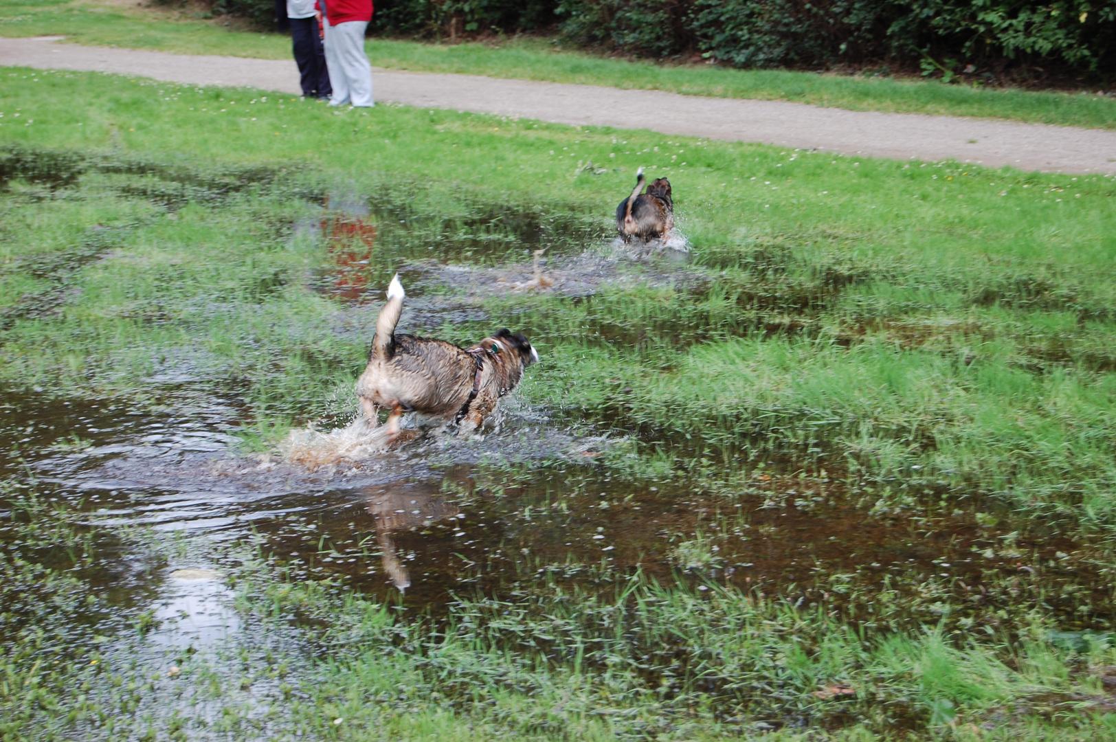 Unsere beiden Hunde beim Toben2