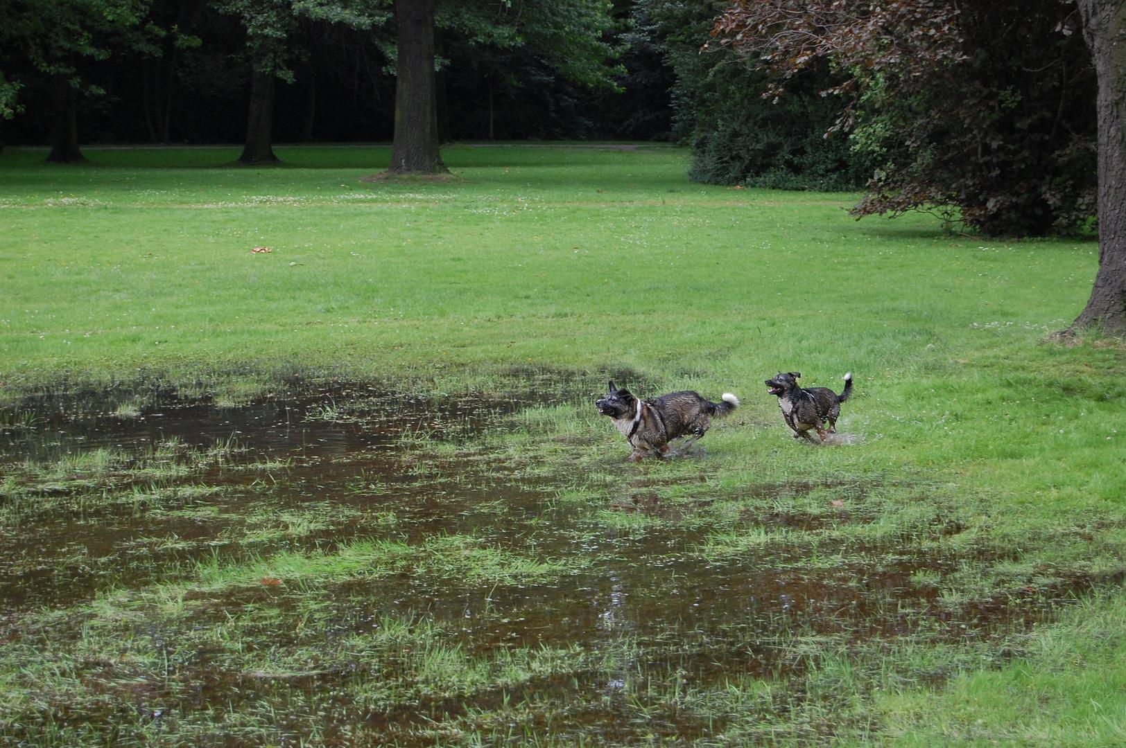 Unsere beiden Hunde beim Toben3