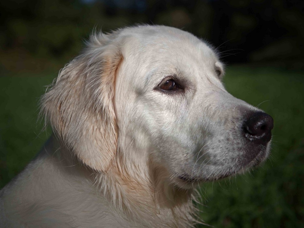 Unsere EMY im Porträt - mittlerweile 1 Jahr alt .