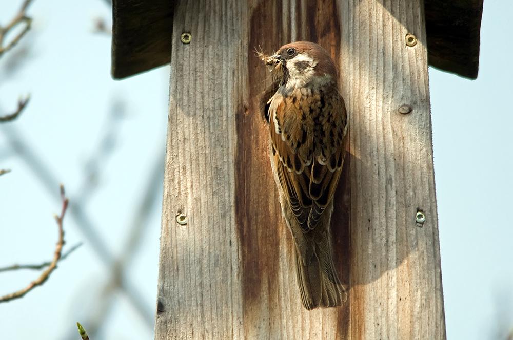 Unsere Gartenvögel (2)