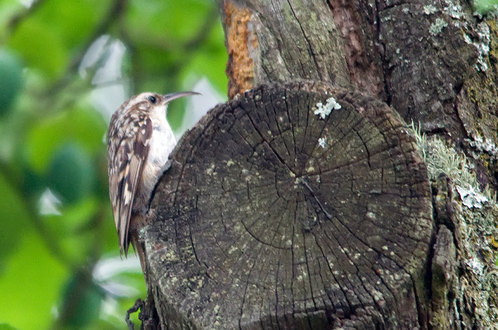 Unsere Gartenvögel (9)