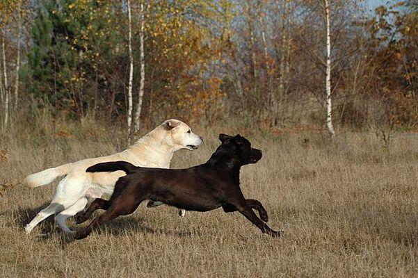 Unsere Hunde beim gemeinsamen Spiel