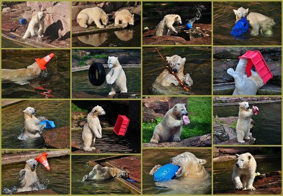 Unsere jungen wilden Eisbären
