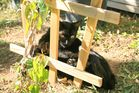 unsere Katze hinter Gitter
