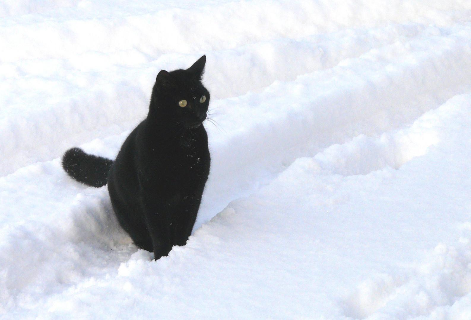 Unsere Katze im Schnee.