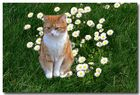 unsere Katze in unserer Wiese