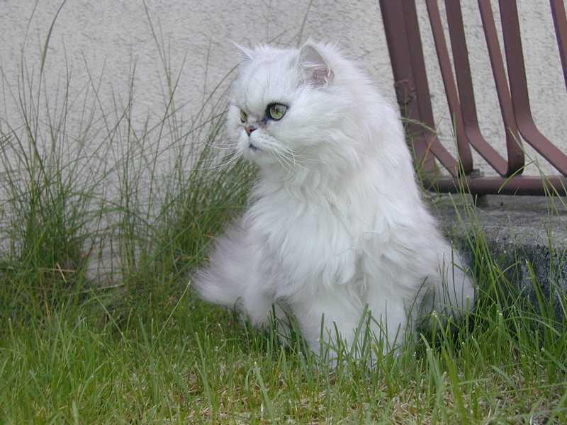 unsere Katze ,,Kira;;