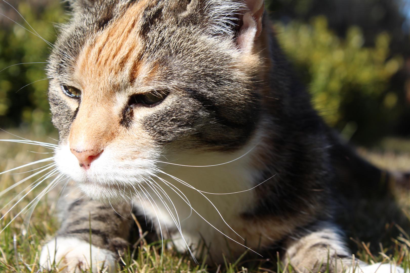Unsere Katze nutzt die Sonne auch aus