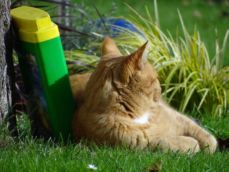 Unsere Katze wacht am Vogelfutter