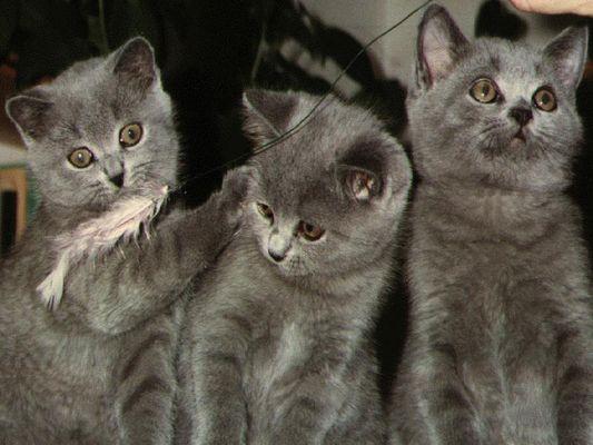 Unsere Katzen!