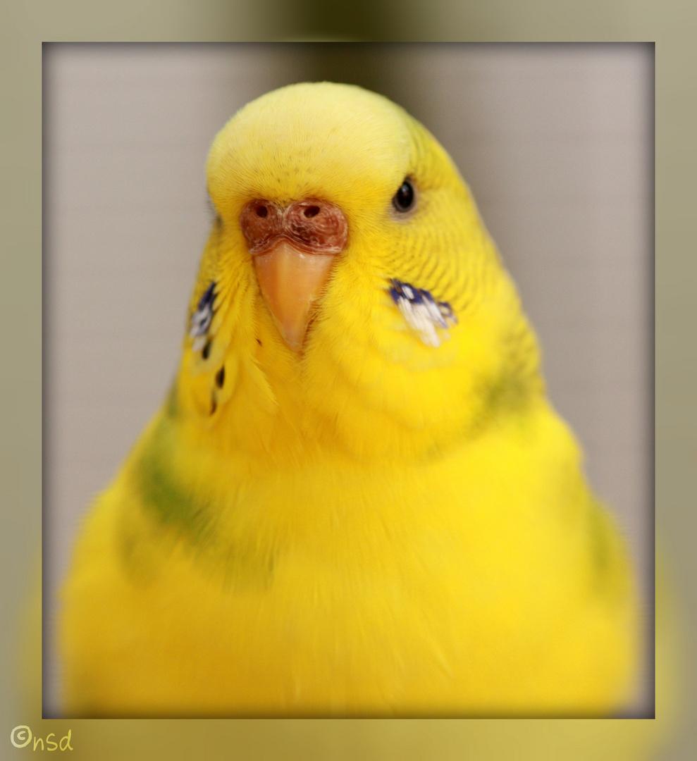 Unsere kleine gelbe