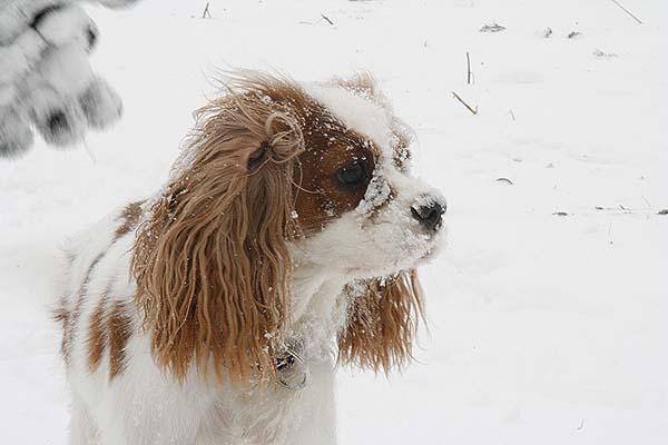 Unsere kleine im Schnee