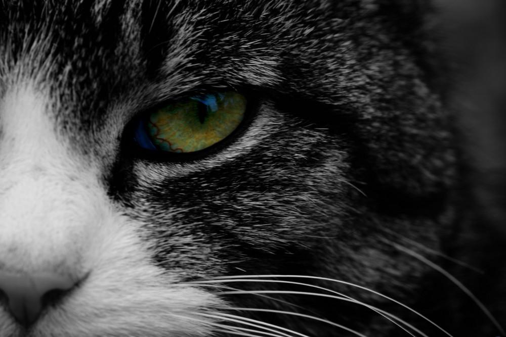 Unsere kleine Katze...