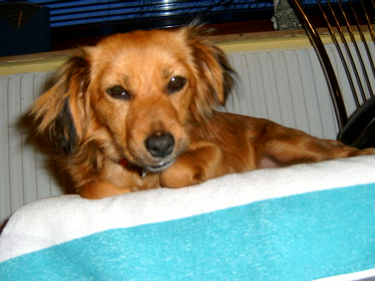 Unsere Lucy