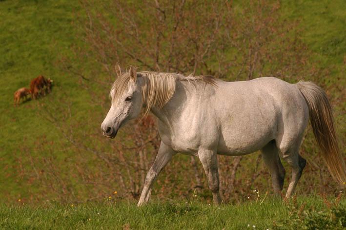 Unsere Pferde sind Bergziegen!