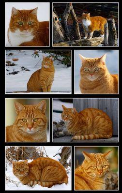 Unsere vier roten Katzen...