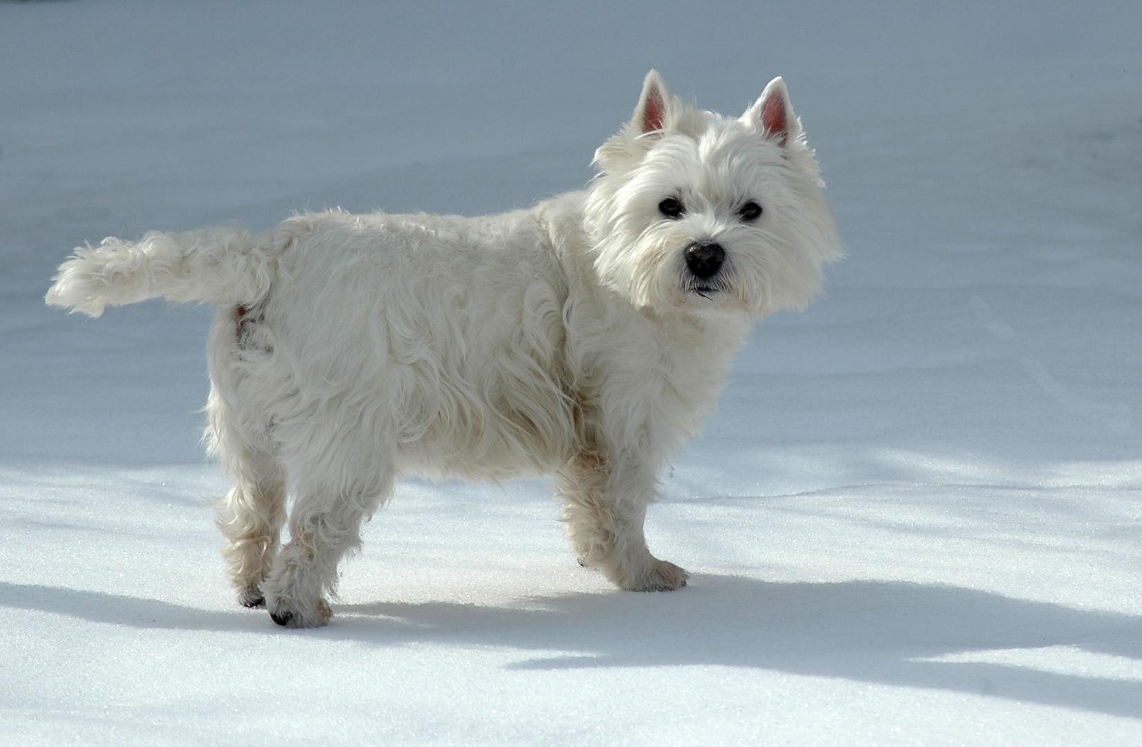 Unserem Django gefällt der Schnee !