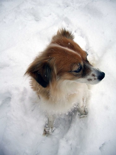 unsre HEXE im Schnee