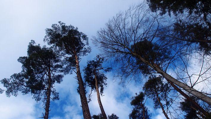 unter Bäumen..