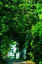 unter Bäumen oder eine grüne Oase inmitten der Stadt