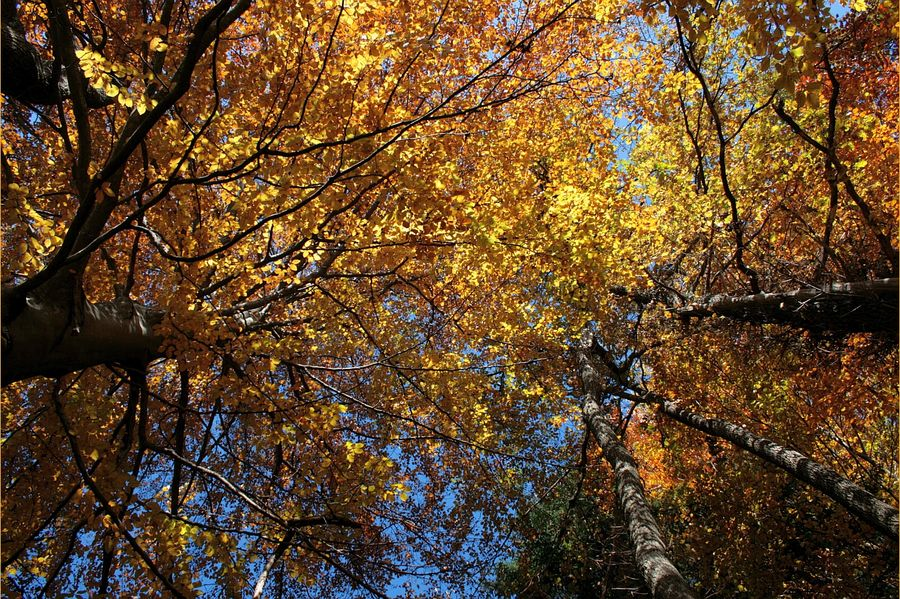 Unter dem goldenen Blätterdach