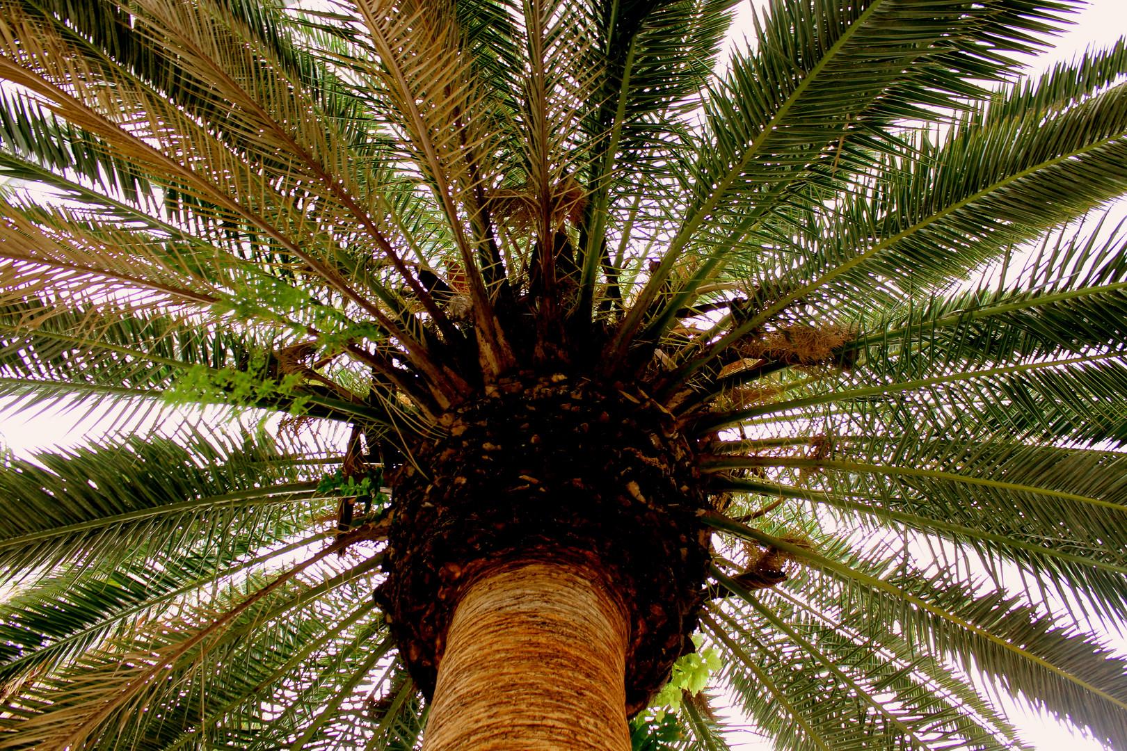 Unter dem Palmendach