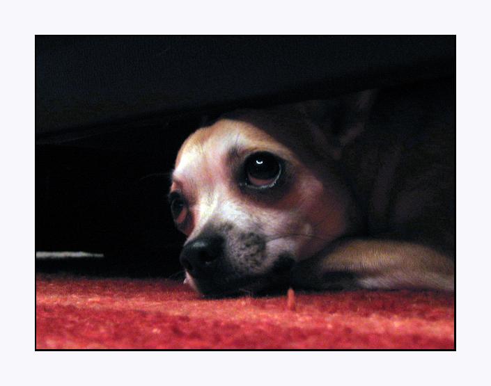 unter der Couch.....