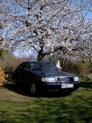 Unter der Kirschblüte