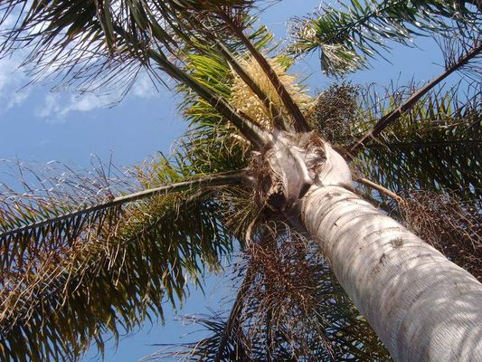 Unter der Palme