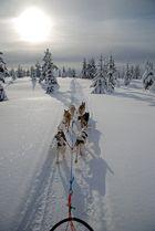Unter der Sonne Finnlands
