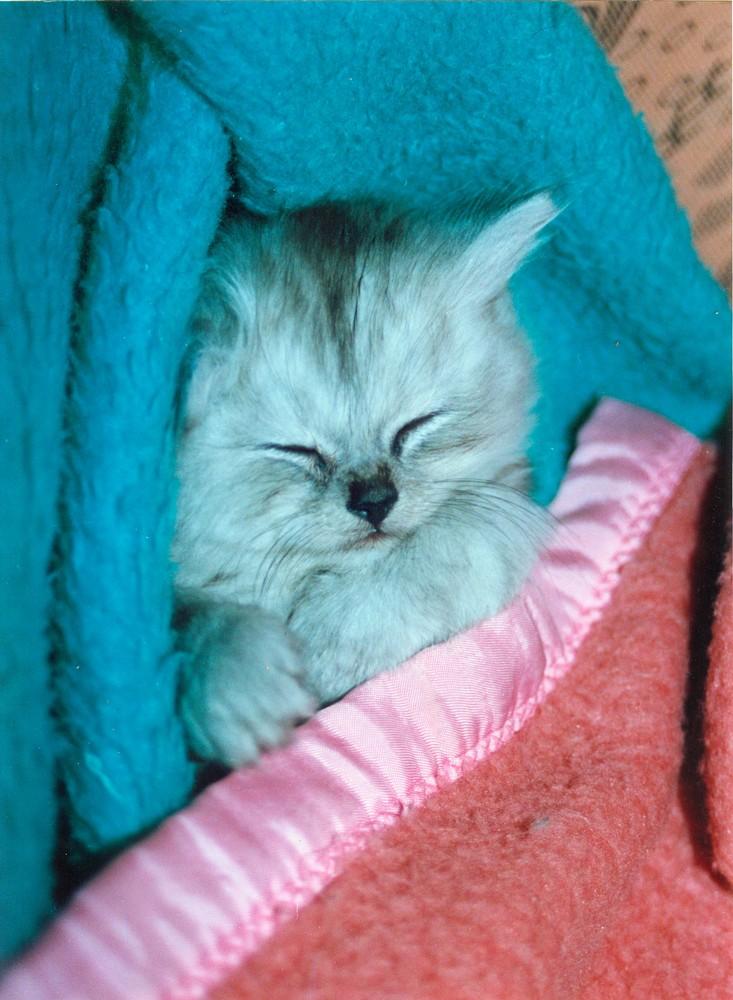 Unter der warmen Decke