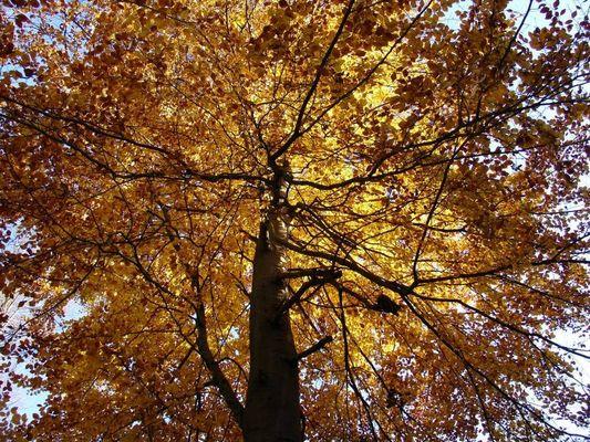 Unter einem Baum