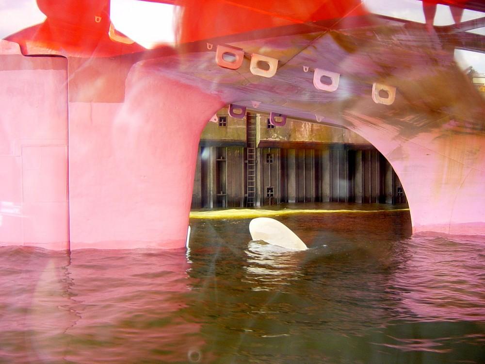 Unter einem Boot