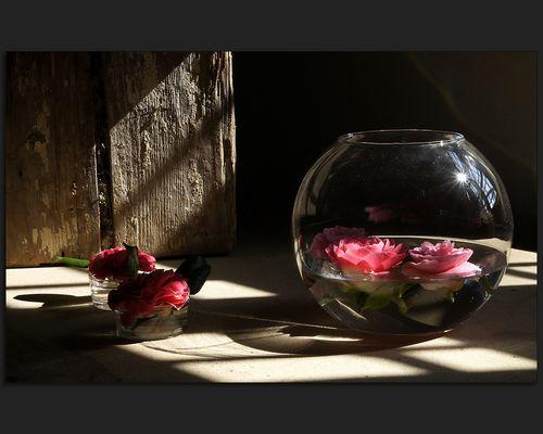 Unter Glas ...
