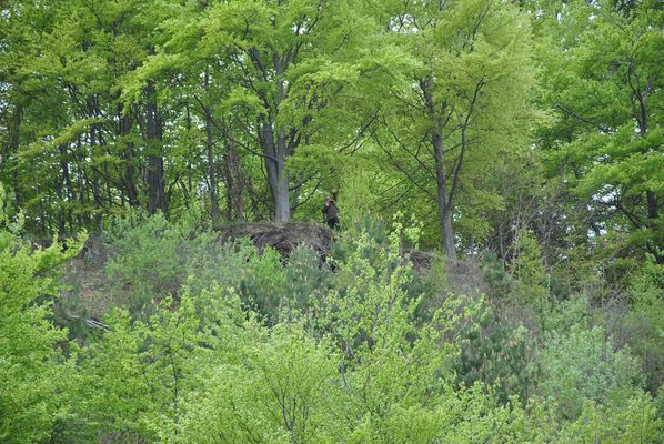 Unter grünen Blättern