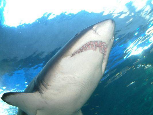 Unter Haien...