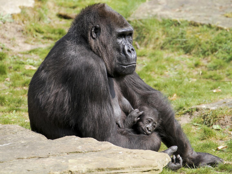 … unter Mutterschutz …