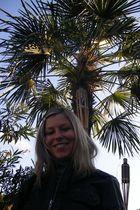 Unter Palmen im Herbst